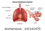 illustration showing the human...   Shutterstock .eps vector #141161470