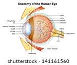 illustration of the human eye...   Shutterstock .eps vector #141161560