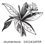 a picture is showing flower.... | Shutterstock .eps vector #1411616939