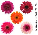 Top View Five Gerbera Flowers - Fine Art prints