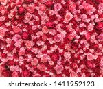 A Wall Full Of Rose Buds. It S...