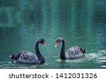 duet of black swans romantic... | Shutterstock . vector #1412031326