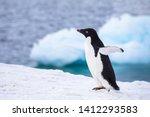 funny adelie penguin running or ... | Shutterstock . vector #1412293583