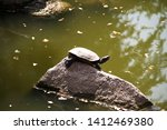 Turtle Resting On The Rock In ...
