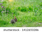 Stock photo innocent cute wild baby european hare lepus europaeus sitting on green grass and looking at 1412653286