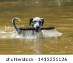 A Great Dane At The River...