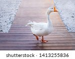White Goose Walks On A Wooden...