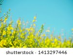Bright Yellow Flowers Against...