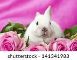 dwarf rabbit with pink roses | Shutterstock . vector #141341983