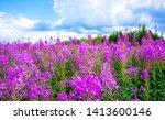 summer purple flowers meadow...   Shutterstock . vector #1413600146
