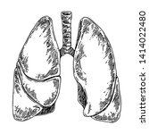 Human Anatomy. Lungs. Sketch....