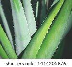 Aloe Vera Plants Tropical Close ...