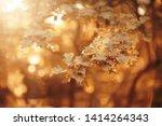 Autumn Landscape Background...