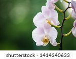 beautiful orchid flower with... | Shutterstock . vector #1414340633