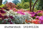 A colourful border display with azaleas, rhododendrons, acers and other shrubs.
