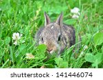bunny in grass | Shutterstock . vector #141446074