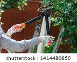 gardener pruning fruit trees... | Shutterstock . vector #1414480850