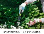 photo of gardener removing weed ... | Shutterstock . vector #1414480856