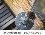 a starling bird perching on a...   Shutterstock . vector #1414481993