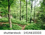 forest trees. nature green wood ... | Shutterstock . vector #1414610333