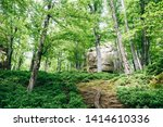 forest trees. nature green wood ... | Shutterstock . vector #1414610336