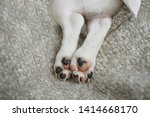 tail  paws a cute puppy dog on...   Shutterstock . vector #1414668170