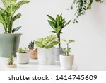 stylish and botany composition... | Shutterstock . vector #1414745609