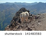 Mountain Goat  Elk Range...