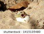 Stock photo africa spurred tortoise are born naturally tortoise hatching from egg cute portrait of baby 1415135480