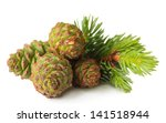 Green Cones And Fir Tree...