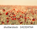 Red Poppy Field At The Early...