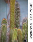 close up shot of some cactuses... | Shutterstock . vector #1415290739