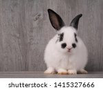 Stock photo black and white cute rabbit on wood table white and black dot on face rabbit funny rabbit 1415327666