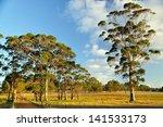 Gum Trees In Farming Scene