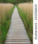 wooden boardwalk in tall reeds... | Shutterstock . vector #141536614
