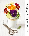 Beautiful pansy flowers in a white creamer and scissors. - stock photo