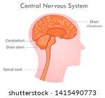central nervous system. human... | Shutterstock .eps vector #1415490773