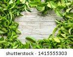frame made of fresh green mint... | Shutterstock . vector #1415555303