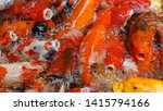 group of colorful fancy carp... | Shutterstock . vector #1415794166