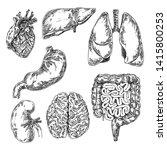 human anatomy. set of internal... | Shutterstock .eps vector #1415800253