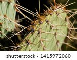 sharp cactus spines close up ... | Shutterstock . vector #1415972060