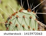 bright green cactus close up... | Shutterstock . vector #1415972063
