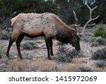 beautiful male elk in the... | Shutterstock . vector #1415972069