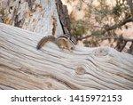 cute little chipmunk sitting on ... | Shutterstock . vector #1415972153