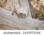 cute chipmunk on a fallen tree... | Shutterstock . vector #1415972156