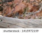 portrait of cute chipmunk on a... | Shutterstock . vector #1415972159