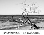 Bare Dried Tree Branch On The...