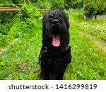 big shaggy black dog. black... | Shutterstock . vector #1416299819