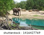 Small photo of African elephants are elephants of the genus Loxodonta. The genus consists of two extant species: the African bush elephant, L. africana, and the smaller African forest elephant, L. cyclotis.