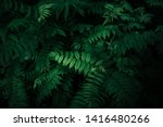 Fresh natural leaves pattern. Beautiful tropical background made with young green fern leaves. Dark and moody feel. Selective focus. Negative space. Concept for design. Flat lay, low-key lighting.